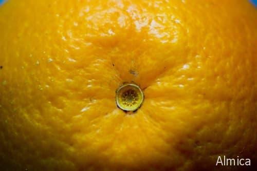 как выбрать вкусный апельсин